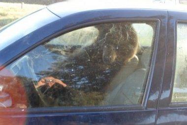 Ez a medve megtanulta, hogyan kell az autók kilincsét használni