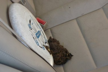 alapos takarításra és fertőtlenítésre szorul az autó
