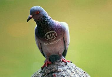 Hessegetőket alkalmaz a Kia a madárpiszok kivédésére